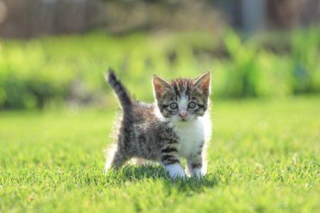猫にしつけをする